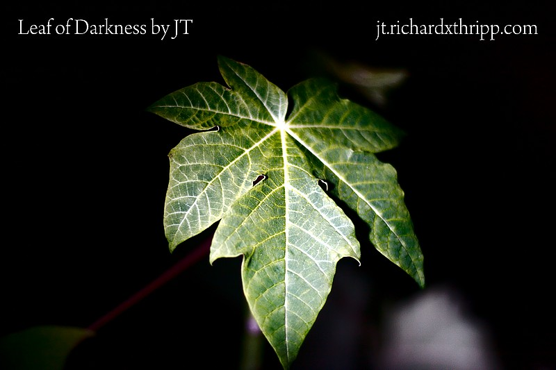 Leaf of Darkness by JT